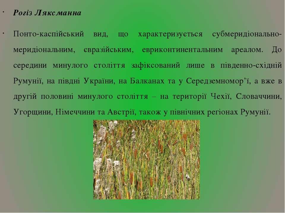 Рогіз Ляксманна Понто-каспійський вид, що характеризується субмеридіонально-м...