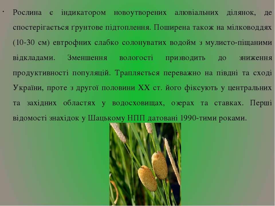 Рослина є індикатором новоутворених алювіальних ділянок, де спостерігається ґ...