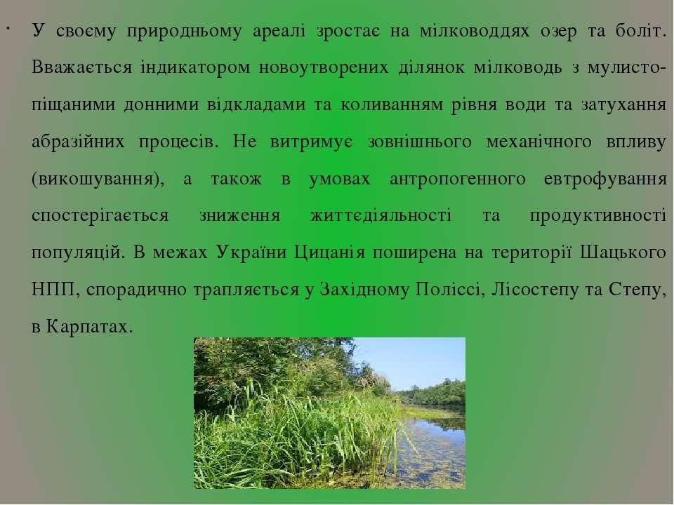 У своєму природньому ареалі зростає на мілководдях озер та боліт. Вважається ...