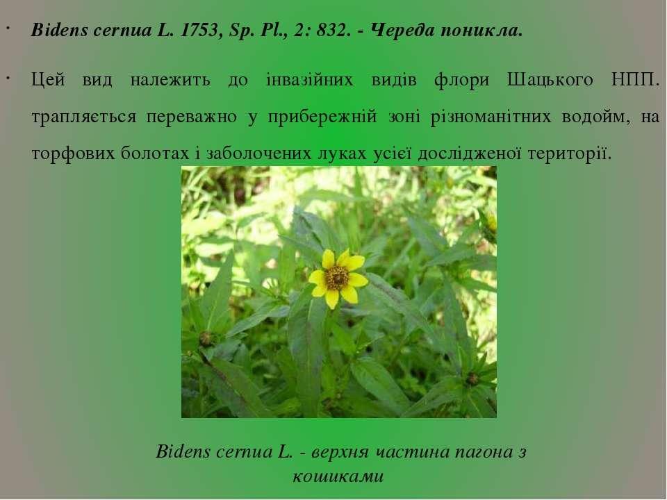 Bidens cernua L. 1753, Sp. Pl., 2: 832. - Череда поникла. Цей вид належить до...