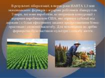 В результаті лібералізації, в перші роки НАФТА 1,3 млн мексиканських фермерів...