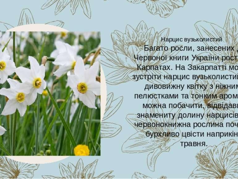 Багато росли, занесених до Червоної книги України ростуть в Карпатах. На Зака...