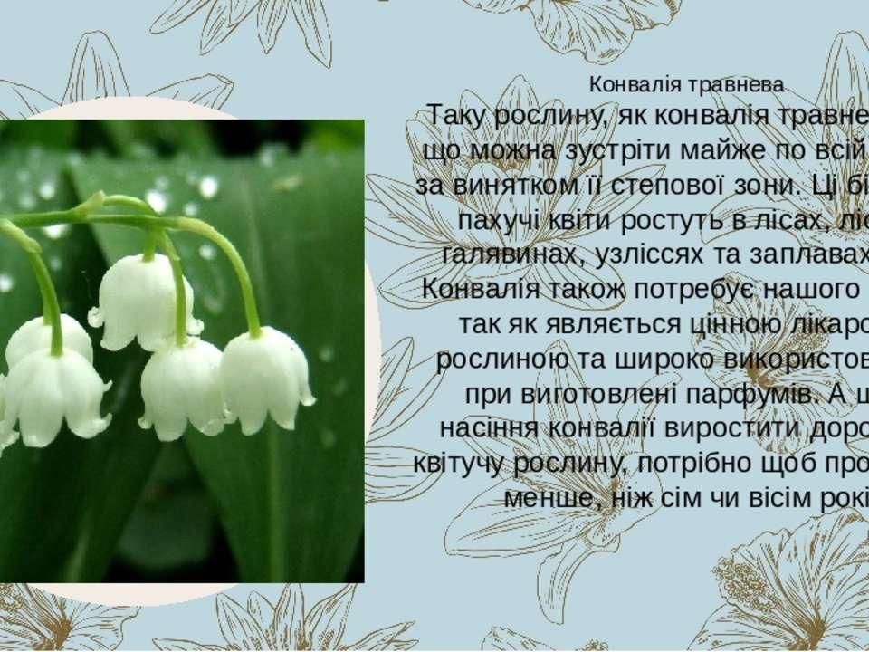Таку рослину, як конвалія травнева, поки що можна зустріти майже по всій Укра...