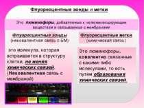 Флуоресцентные зонды и метки Это люминофоры, добавляемые к нелюминесцирующим ...