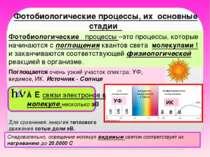 Фотобиологические процессы, их основные стадии Фотобиологические процессы –эт...
