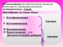 Многообразие, но стадии общие: Все разнообразие фотобиологических процессов м...