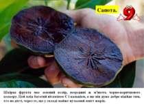 Сапота. Шкірка фрукта має зелений колір, всередині ж м'якоть чорно-коричневог...