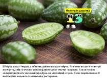 Мелотрія шорстка Шкірка плоду тверда, а м'якоть дійсно нагадує огірок. Важлив...