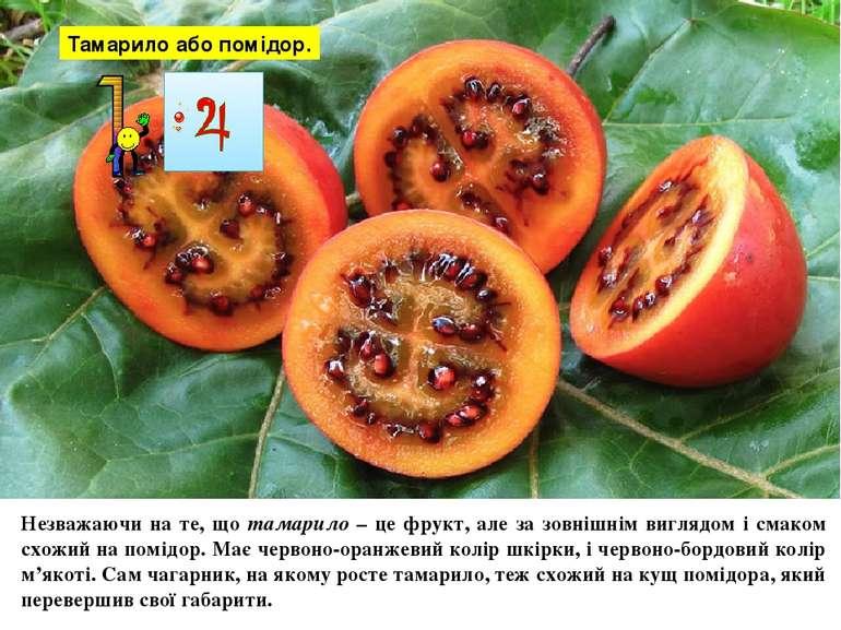 Тамарило або помідор. Незважаючи на те, що тамарило – це фрукт, але за зовніш...