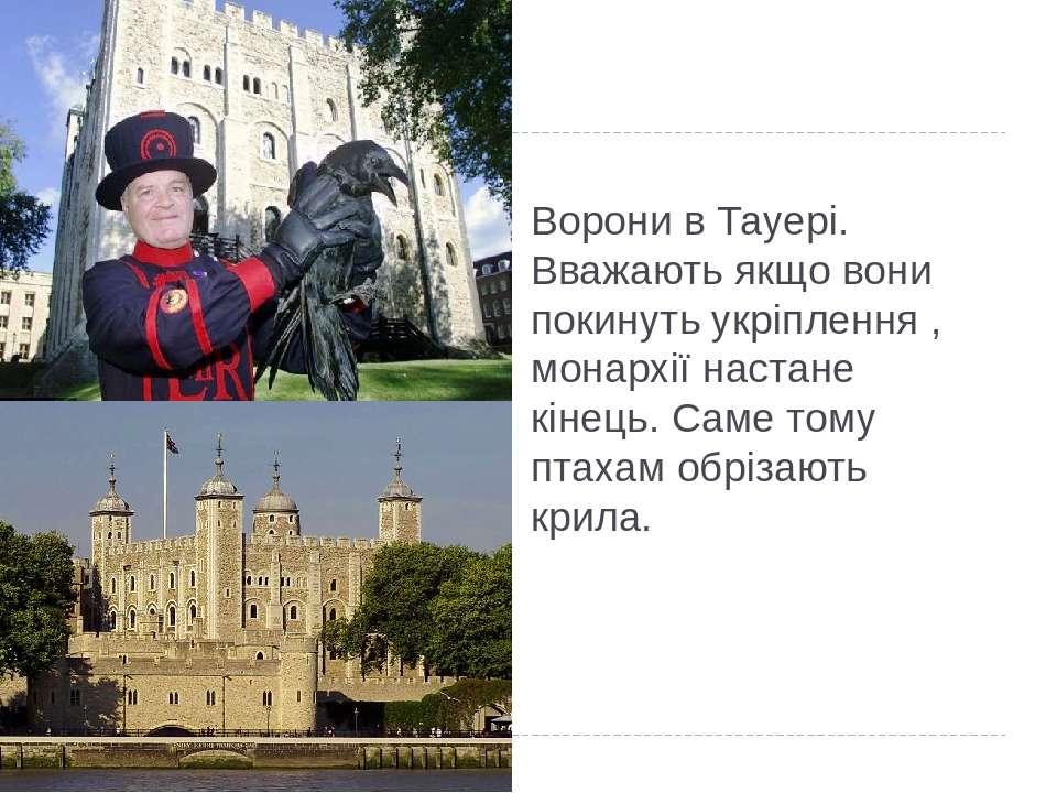 Ворони в Тауері. Вважають якщо вони покинуть укріплення , монархії настане кі...
