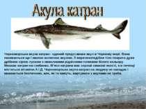 Чорноморська акула катран - єдиний представник акул в Чорному морі. Вона нази...