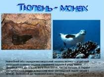 Звичайний або середземноморський тюлень-монах — рідкісний морський ссавець ро...