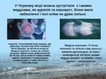 У Чорному морі можна зустрітися з такими медузами, як аурелія та корнерот. Во...
