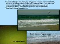 Сильне забруднення річок, що впадають в море, стоками з полів, що містять мін...