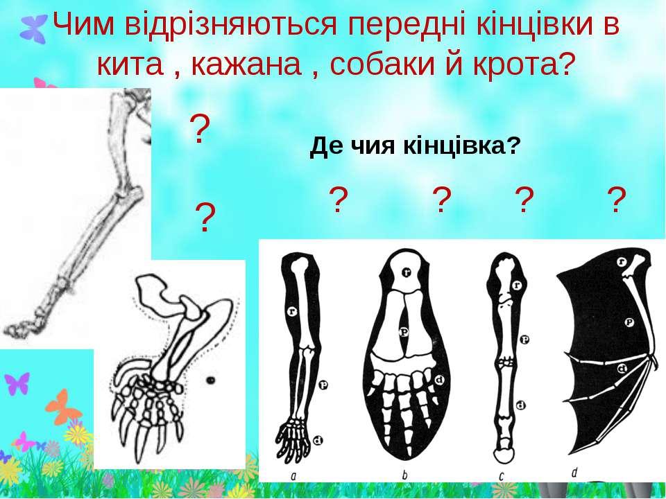 Чим відрізняються передні кінцівки в кита , кажана , собаки й крота?