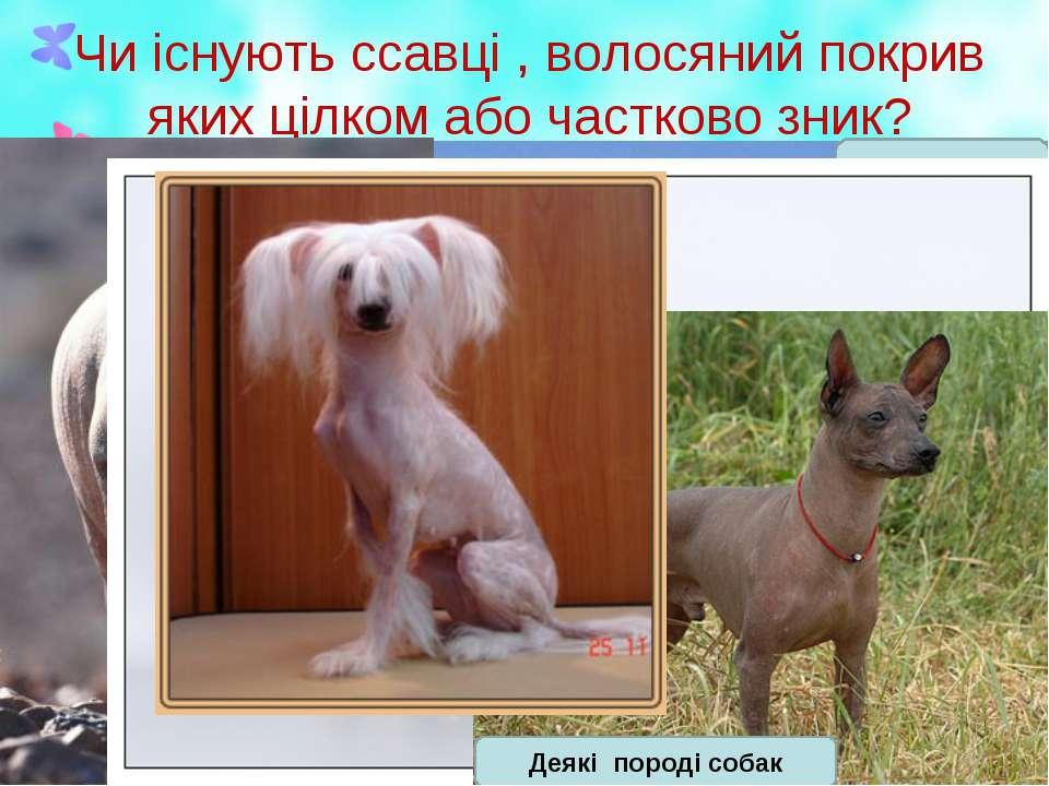 Чи існують ссавці , волосяний покрив яких цілком або частково зник?