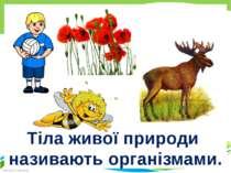 Тіла живої природи називають організмами. Кресак Наталя Миколаївна FokinaLida...