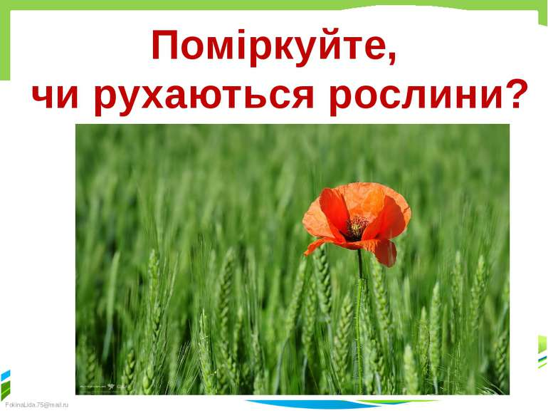 Поміркуйте, чи рухаються рослини? Кресак Наталя Миколаївна FokinaLida.75@mail.ru