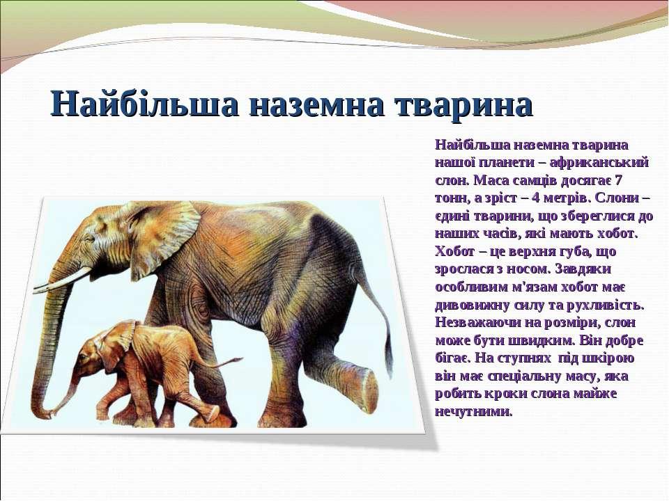 Найбільша наземна тварина Найбільша наземна тварина нашої планети – африкансь...