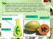 Зародок і ендосперм, розвиваючись, витісняють інші клітини зародкового мішка,...