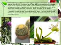 Найбільша складність і різноманітність будови серед усіх вегетативних органів...