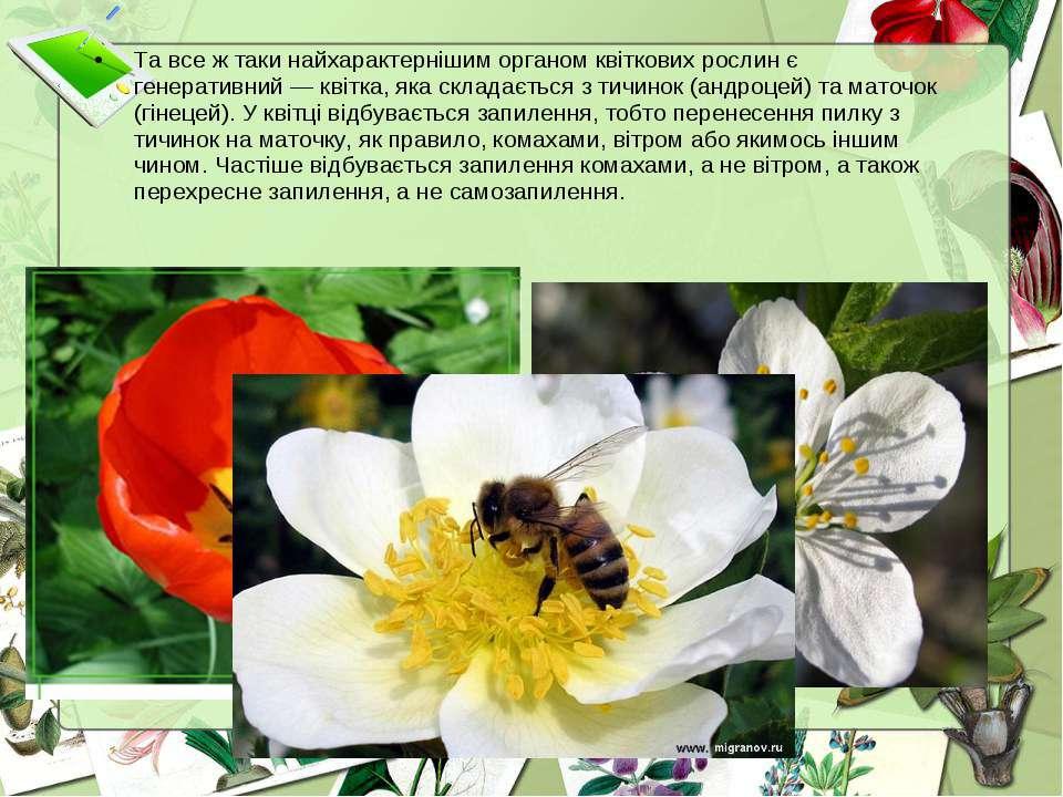 Та все ж таки найхарактернішим органом квіткових рослин є генеративний — квіт...