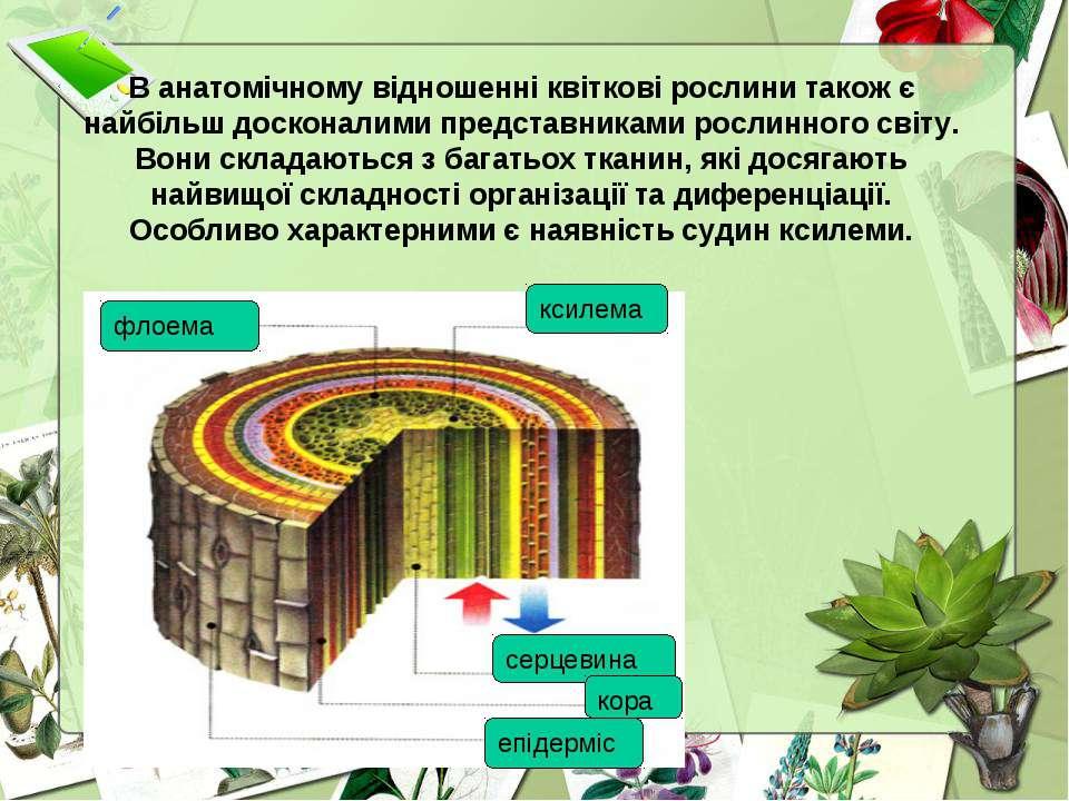 В анатомічному відношенні квіткові рослини також є найбільш досконалими предс...