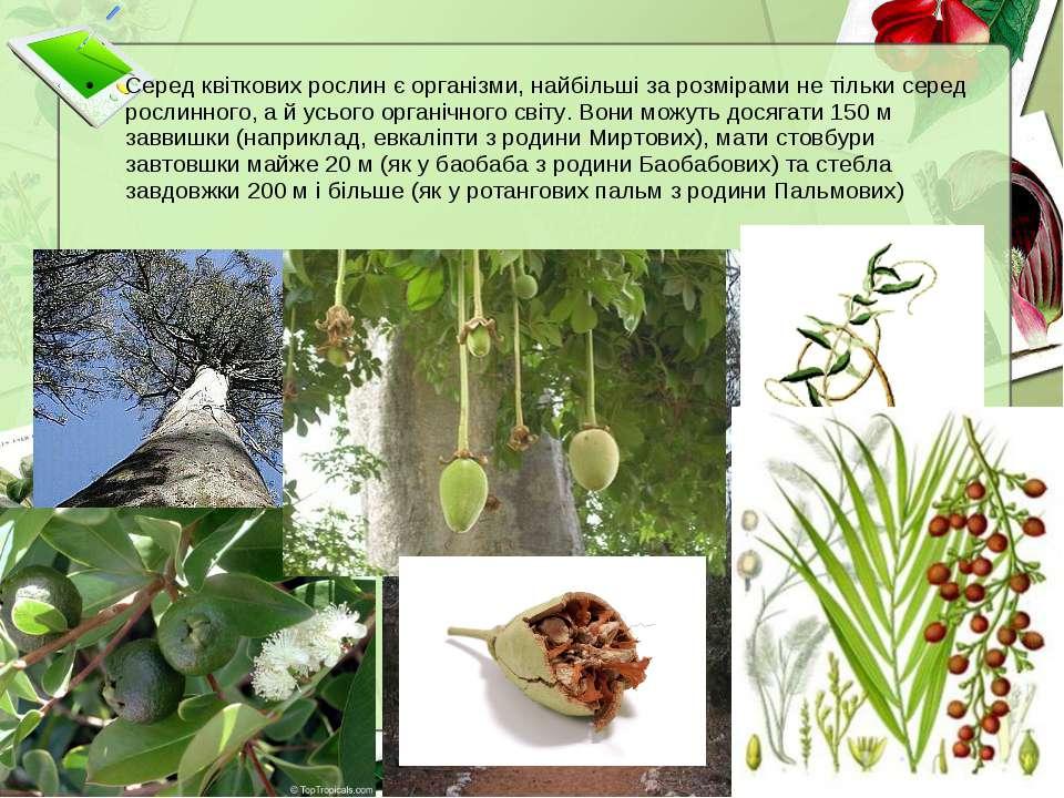 Серед квіткових рослин є організми, найбільші за розмірами не тільки серед ро...