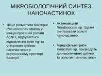 МІКРОБІОЛОГІЧНИЙ СИНТЕЗ НАНОЧАСТИНОК Якщо розмістити бактерію Pseudomonas stu...