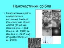 Наночастинки срібла Наночастинки срібла акумулюються клітинами бактерії Pseud...