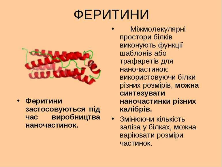 ФЕРИТИНИ Міжмолекулярні простори білків виконують функції шаблонів або трафар...