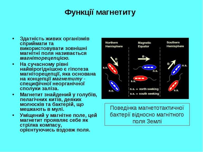 Функції магнетиту Здатність живих організмів сприймати та використовувати зов...