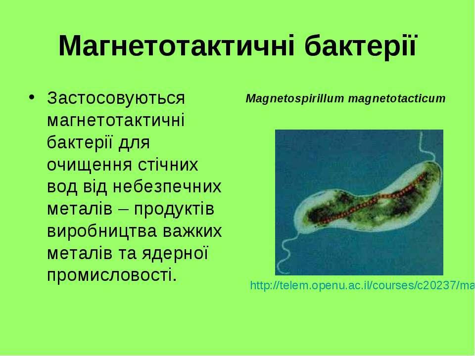 Магнетотактичні бактерії Застосовуються магнетотактичні бактерії для очищення...