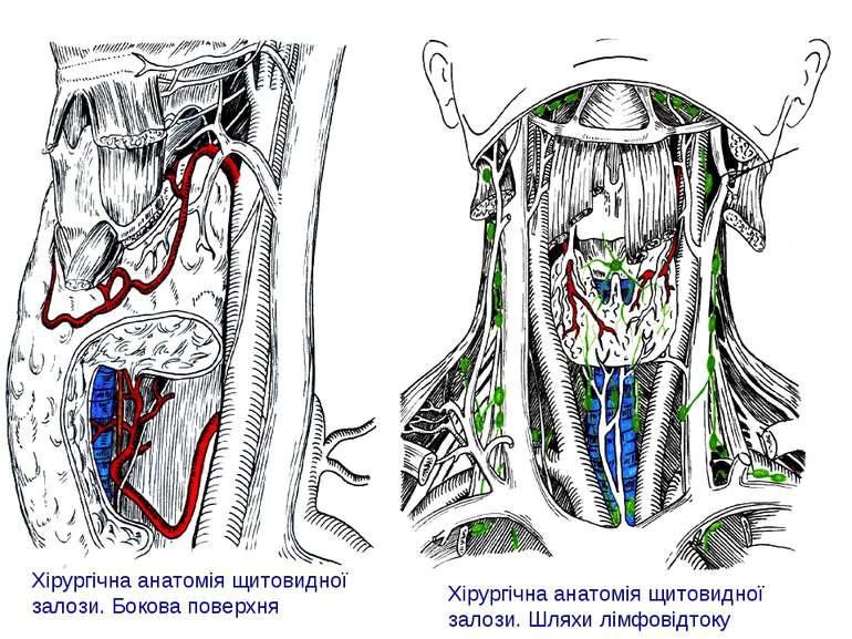 Хірургічна анатомія щитовидної залози. Шляхи лімфовідтоку Хірургічна анатомія...
