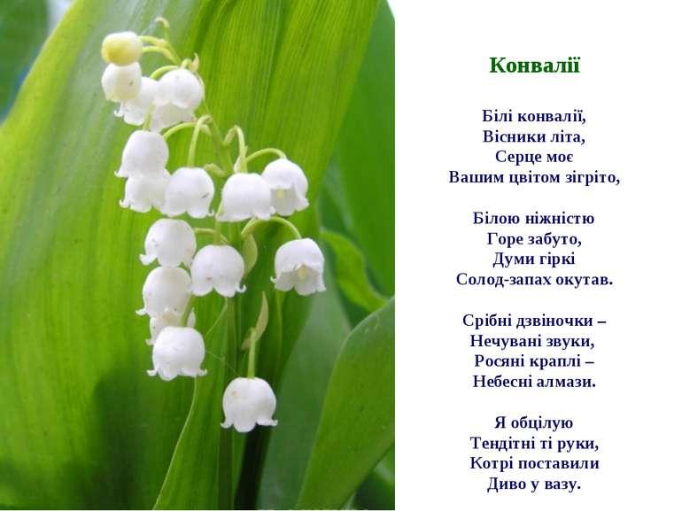Конвалії Білі конвалії, Вісники літа, Серце моє Вашим цвітом зігріто, Білою н...