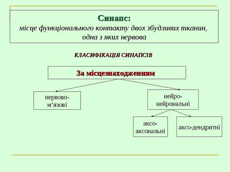 Синапс: місце функціонального контакту двох збудливих тканин, одна з яких нер...