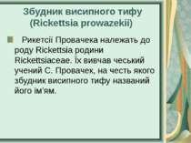 Збудник висипного тифу (Rickettsia prowazekii) Рикетсії Провачека належать...