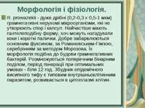 Морфологія і фізіологія. R. prowazekii - дуже дрібні (0,2-0,3 х 0,5-1 мкм) гр...