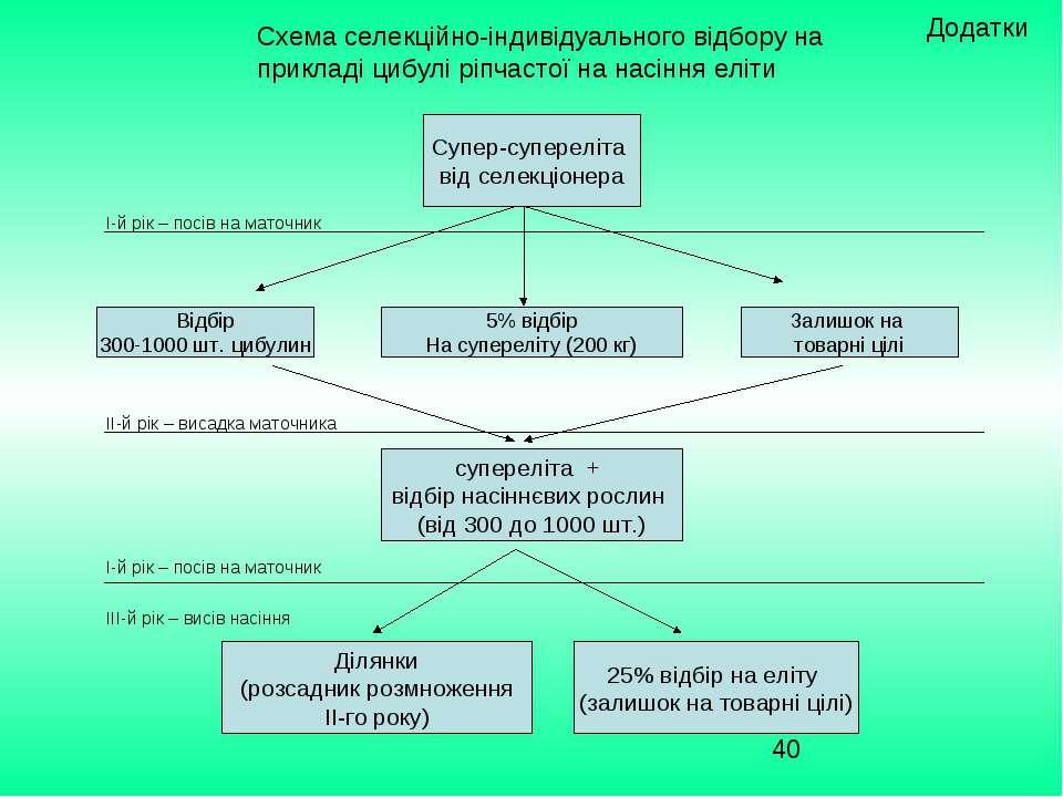 Схема селекційно-індивідуального відбору на прикладі цибулі ріпчастої на насі...