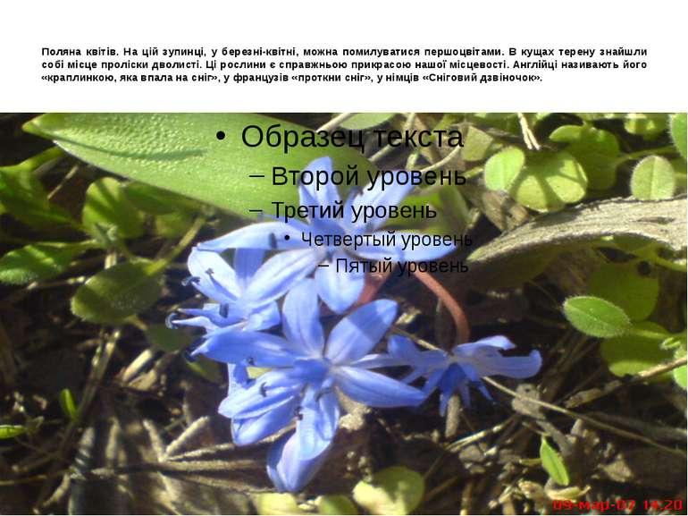Поляна квітів. На цій зупинці, у березні-квітні, можна помилуватися першоцвіт...