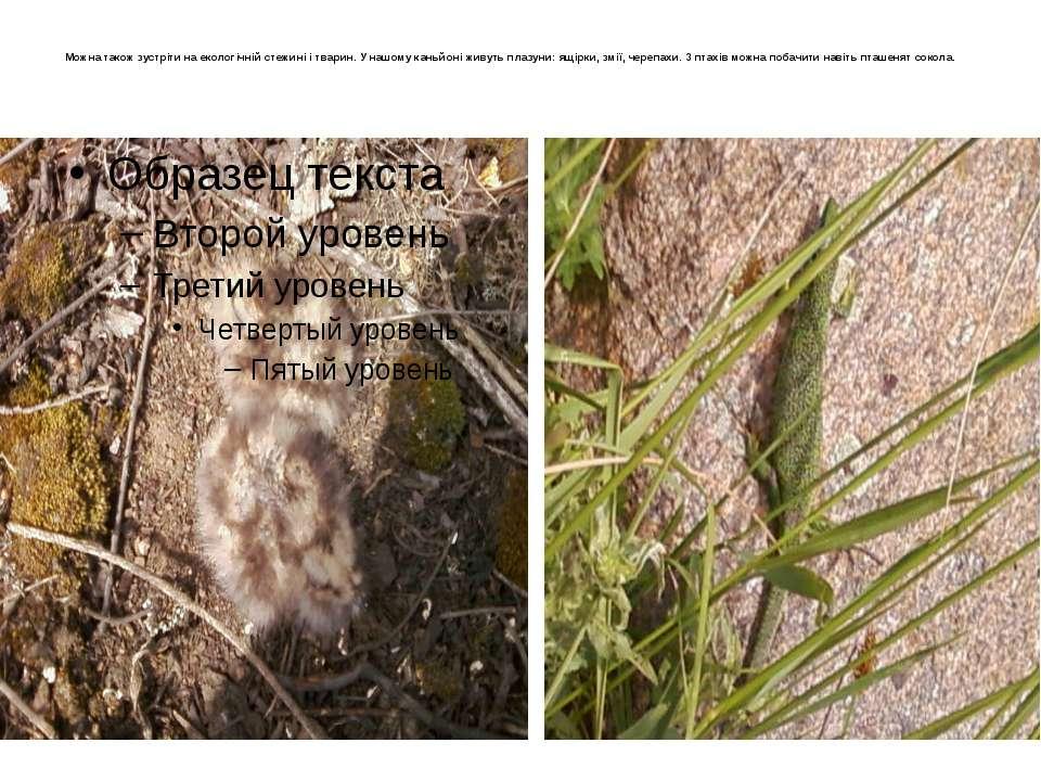 Можна також зустріти на екологічній стежині і тварин. У нашому каньйоні живут...