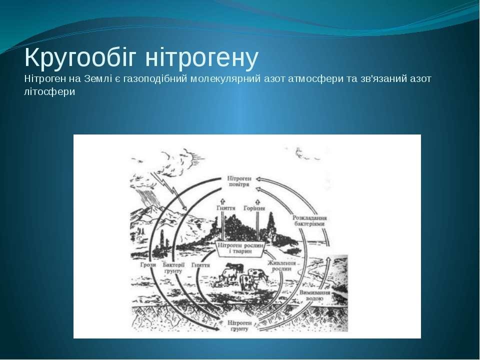 Кругообіг нітрогену Нітроген на Землі є газоподібний молекулярний азот атмосф...