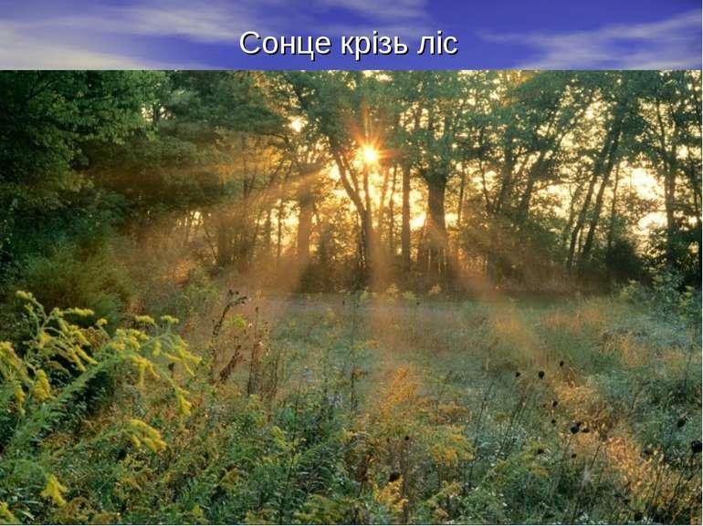 Сонце крізь ліс