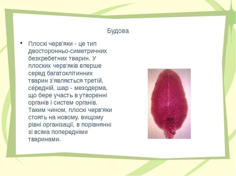 Будова Плоскі черв'яки - це тип двосторонньо-симетричних безхребетних тварин....