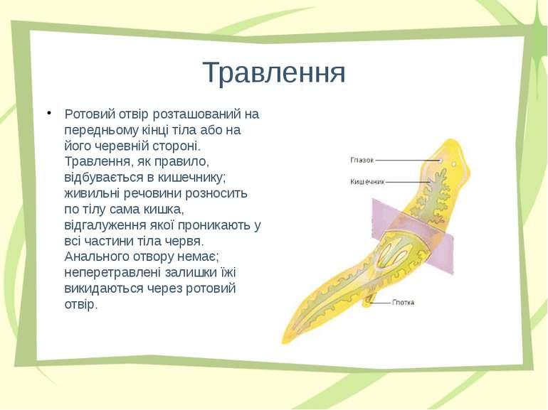 Травлення Ротовий отвір розташований на передньому кінці тіла або на його чер...