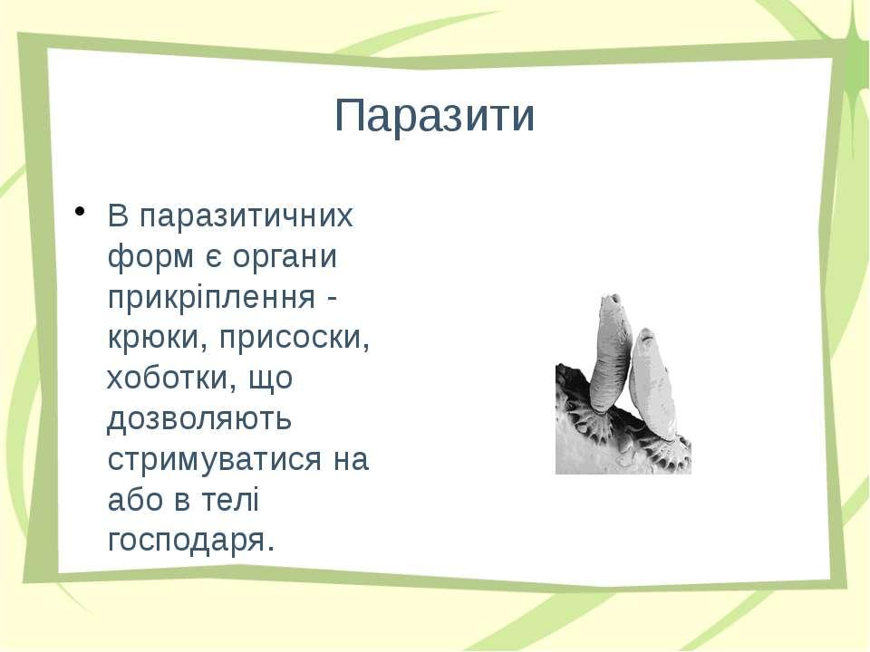 Паразити В паразитичних форм є органи прикріплення - крюки, присоски, хоботки...