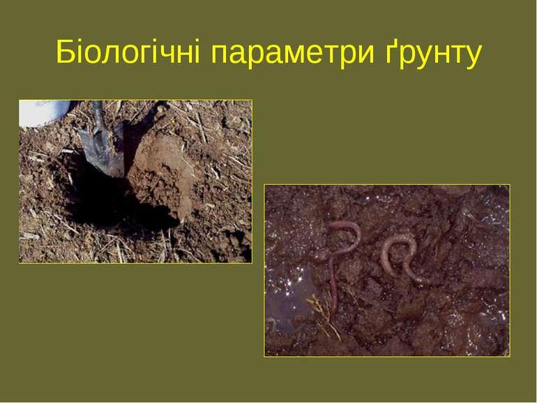 Біологічні параметри ґрунту