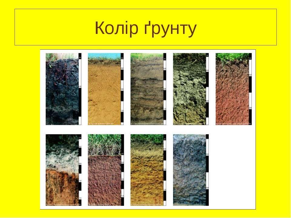 Колір ґрунту