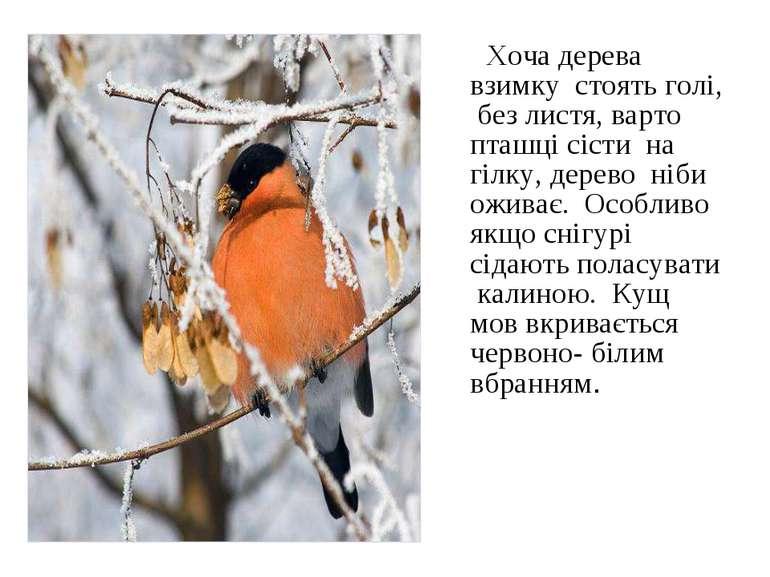 Хоча дерева взимку стоять голі, без листя, варто пташці сісти на гілку, дерев...