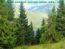 За тундрою величезні простори займає тайга – хвойні ліси.
